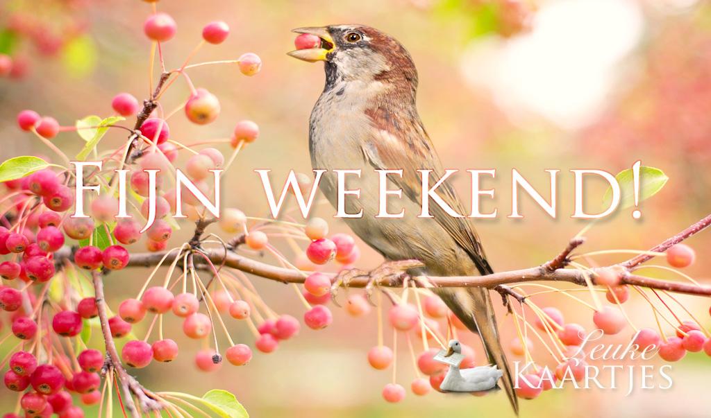 Fijn weekend! Geniet van het herfstzonnetje