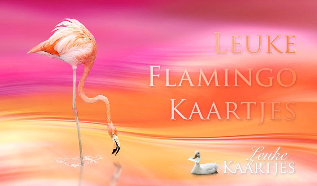 Leuke FlamingoKaartjes