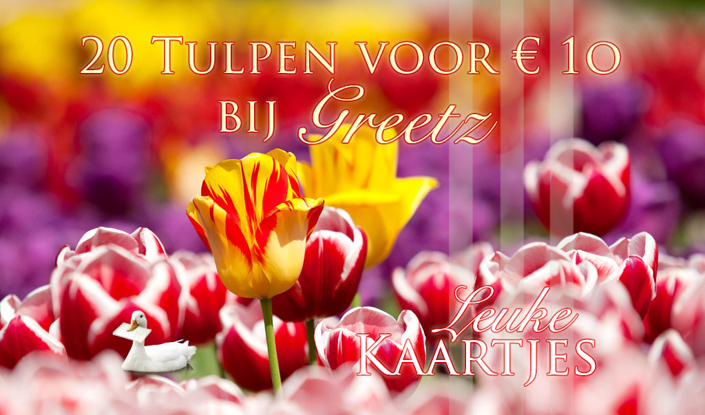 Tulpen voor een tientje